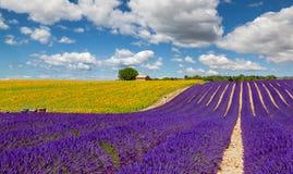 Lavendel und Sonnenblumenfeld in Valensole Stockfotos