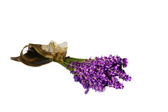Lavendel voor witte achtergrond Royalty-vrije Stock Foto's