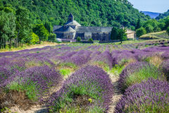 Lavendel vor dem abbaye de Senanque in Provence Lizenzfreie Stockfotografie