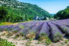 Lavendel vor dem abbaye de Senanque in Provence Stockfotografie