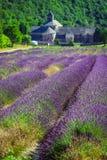 Lavendel vor dem abbaye de Senanque in Provence Lizenzfreie Stockfotos