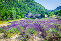 Lavendel vor dem abbaye de Senanque in Provence Stockbilder