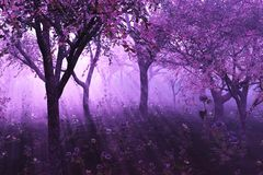 Lavendel-Wald Lizenzfreies Stockbild