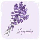 Lavendelachtergrond royalty-vrije illustratie