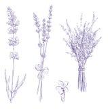 Lavendelbleistiftzeichnungsset Lizenzfreie Stockfotografie