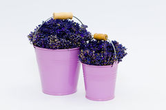 Lavendelbloem in purpere emmer twee royalty-vrije stock foto's