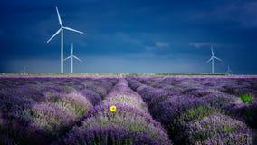 Lavendelbloemen in de lente met eolian molens Stock Foto's