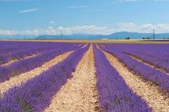 Lavendelbloemen met in Frankrijk Royalty-vrije Stock Foto