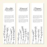 Lavendelbloemen op worden geïsoleerd witte, verticale banners, etiketten, hand getrokken kruiden uitstekende grafisch van de krab royalty-vrije illustratie