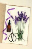 Lavendelblommaört Arkivfoto