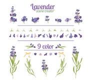 Lavendelblomma på vit bakgrund Färgrik tappningillustration royaltyfri illustrationer