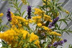 Lavendelblomma samman med ängblomman Arkivbild