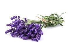 Lavendelblommagrupp Royaltyfri Bild