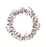 Lavendelblommakrans på en vit bakgrund Royaltyfria Foton