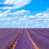 Lavendelblomman fields horisonten. Provence Frankrike Arkivfoto