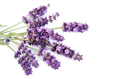 Lavendelblumen Stockfotografie