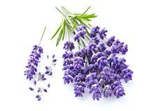 Lavendelblumen auf Weiß Stockfoto
