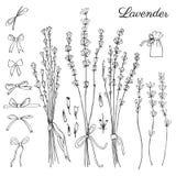 Lavendelblumen, Bogen, Gekritzel-Vektorskizze des Bandes Hand gezeichnete lokalisiert auf grafischem Stich der weißen, Kräuterwei stock abbildung