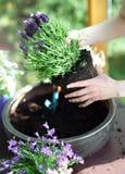 Lavendelblumenanordnung Lizenzfreie Stockfotos