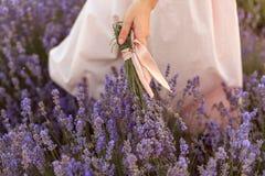 Lavendelboeket in meisjeshand wat betreft lavendelgebied royalty-vrije stock fotografie
