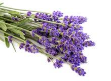 Lavendelbos op een witte achtergrond Stock Afbeelding