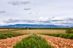 Lavendelfält av Provence i Juni arkivfoto