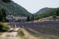 Lavendelfält framme av abbotskloster av Notre-Dame de Senanque I Fotografering för Bildbyråer