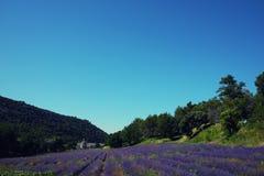 Lavendelfält framme av den Senanque abbotskloster royaltyfria bilder