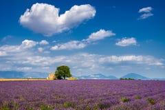 Lavendelfält i hjärtan av Valensole, sydliga Frankrike arkivfoto