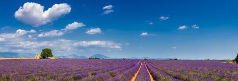Lavendelfält i hjärtan av Valensole, sydliga Frankrike Arkivbild