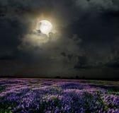 Lavendelfält i månskenet Royaltyfri Fotografi