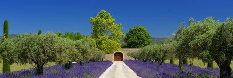 Lavendelfält i Provence Royaltyfria Bilder