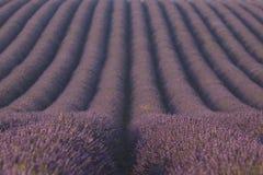 Lavendelfält i Provence, Frankrike Royaltyfria Foton