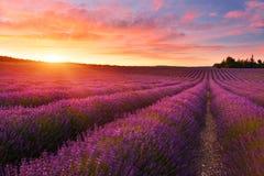 Lavendelfält i sommarbygd, Provence, franc fotografering för bildbyråer