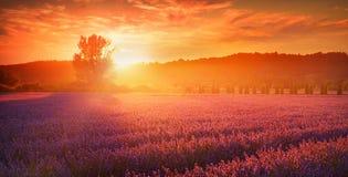 Lavendelfält i sommarbygd, Provence, franc royaltyfria bilder
