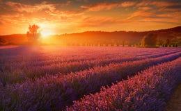 Lavendelfält i sommarbygd, Provence, franc royaltyfri foto