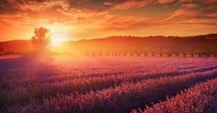 Lavendelfält i sommarbygd, Provence, franc arkivbild