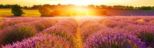 Lavendelfält i sommarbygd, Provence, franc royaltyfri fotografi