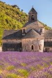 Lavendelfält med den Senanque kloster i Provence, Gordes, Frankrike Arkivfoton