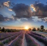 Lavendelfält mot färgrik solnedgång i Provence, Frankrike Royaltyfri Fotografi