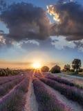 Lavendelfält mot färgrik solnedgång i Provence, Frankrike Arkivfoton