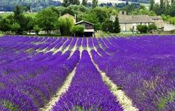Lavendelfält nära Cereste arkivbilder