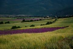 Lavendelfält, nära Kazanlak, Bulgarien Royaltyfria Bilder