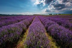 Lavendelfält, nära Kazanlak, Bulgarien Fotografering för Bildbyråer