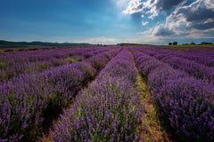Lavendelfält, nära Kazanlak, Bulgarien Arkivbilder