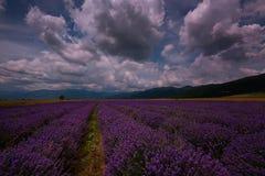 Lavendelfält nära Kazanlak, Bulgarien Royaltyfri Fotografi