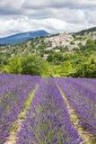 Lavendelfält och by Royaltyfri Foto