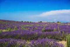 Lavendelfält och fabriker nära byn av Valensole, Provence, Frankrike royaltyfria bilder