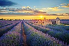 Lavendelfält på solnedgången Royaltyfri Fotografi