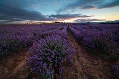 Lavendelfält på solnedgången, Bulgarien Royaltyfri Foto